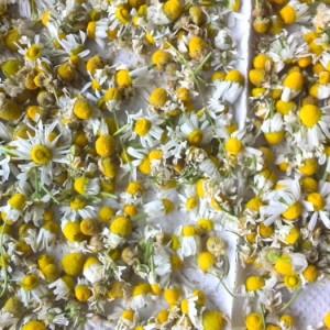 herbを日常で使う・・・実は狩猟民族だった日本の縄文文化の中で、すでに密着していたことが見えてくるの画像